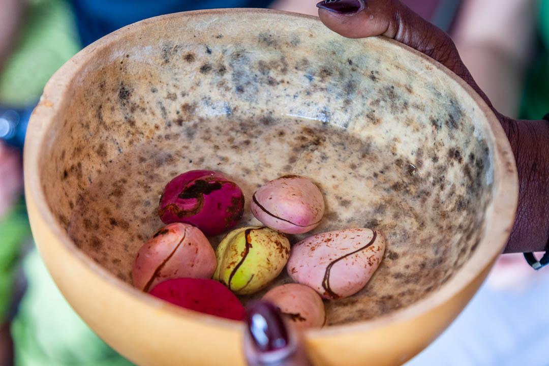 Kola-Nüsse in einer Schüssel mit Wasser